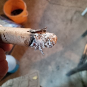 flayed ash