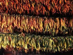 rainbow tabak