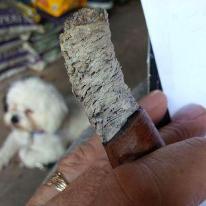 ash longest