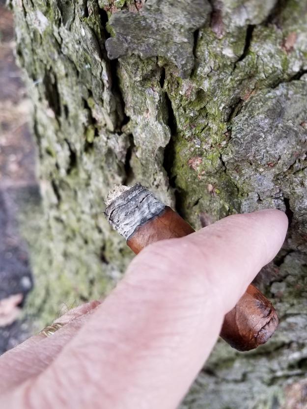 tree cigar 2