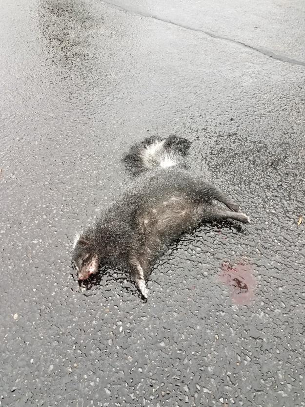 dead skunk